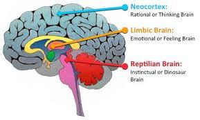cerebro triuno 2